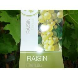 Jeunes Plants de vigne Danuta sans pépins