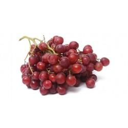 Plants de vigne Crimson rouge SANS PEPINS