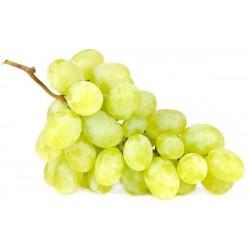 Plants de vigne greffé Italia blanc