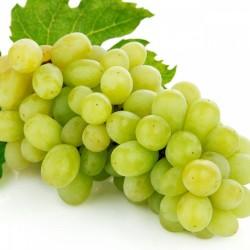 Jeunes Plants de vigne Exalta blanc sans pépins