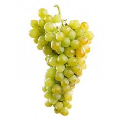 Jeunes Plants de vigne Muscat d'Alexandrie